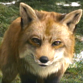 Fiction_Fox
